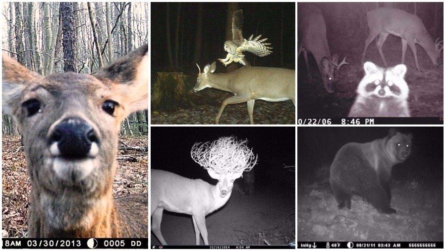 Веселые фото диких животных, которые попали на скрытую камеру