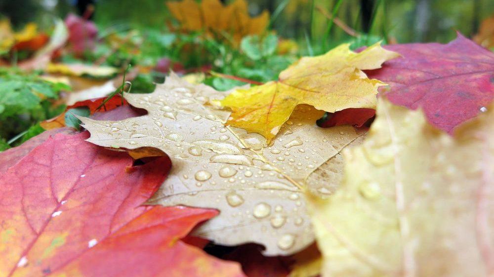 Чего ждать от погоды в понедельник, 16 октября?