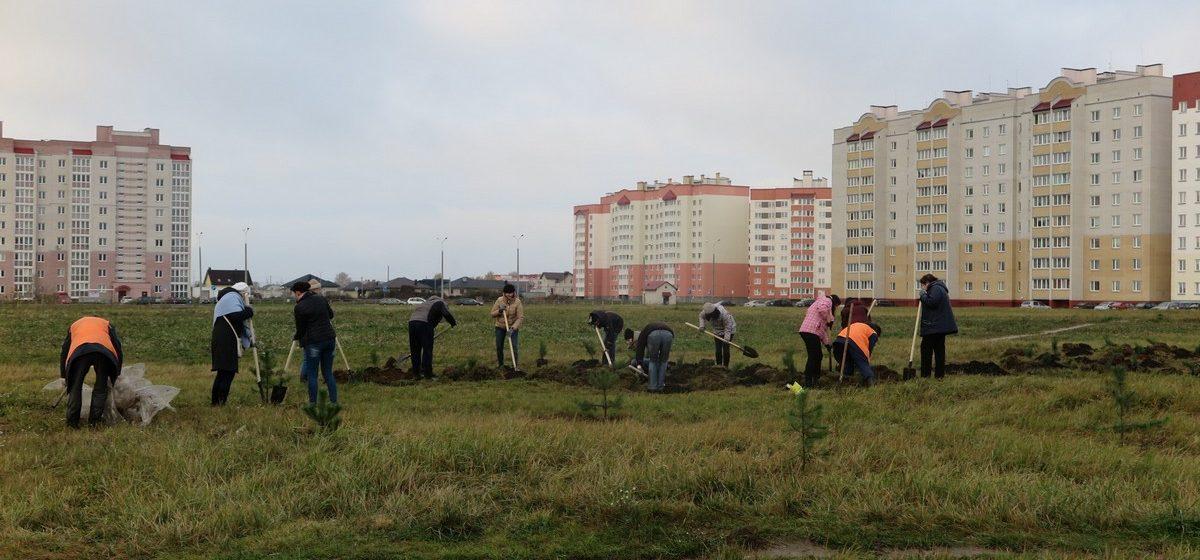 В Барановичах высадили деревья в новом парке в Боровках