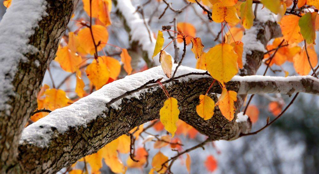 Метеорологи рассказали, каким будет в Барановичах начало ноября