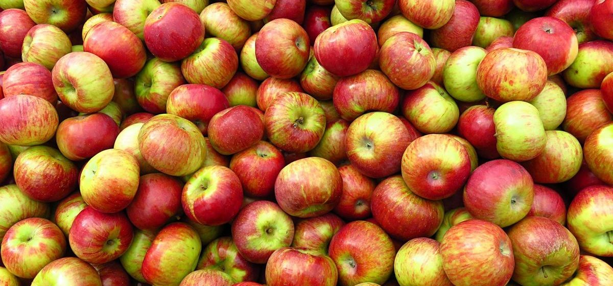 Что почем. На барановичских рынках вдвое подорожали яблоки и появилась редиска