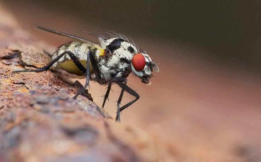 Европейские ученые установили, что за последние 27 лет на 80% уменьшилась масса летающих насекомых