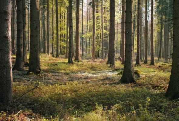 Акция «Чистый лес» пройдет в Барановичах