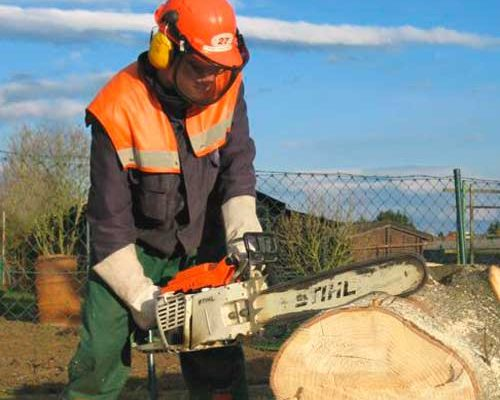 «Молодые деревья не компенсируют потери взрослых» – эколог о вырубке деревьев в Барановичах
