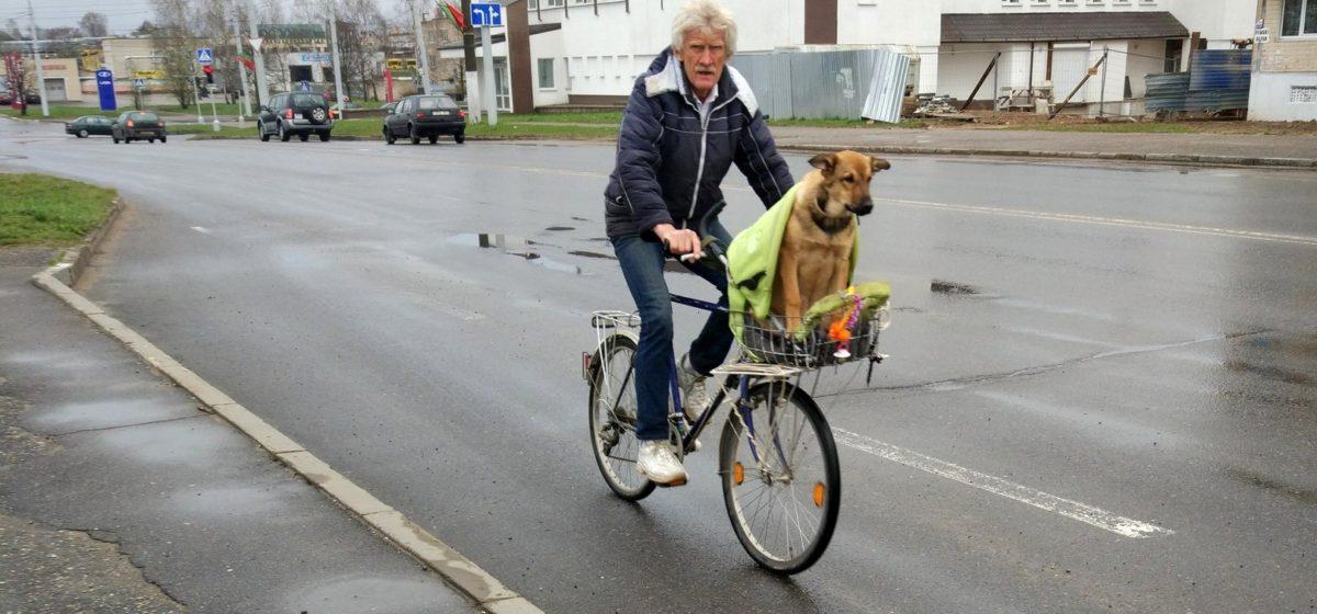В Витебске ищут собаку, которая ездит на велосипеде