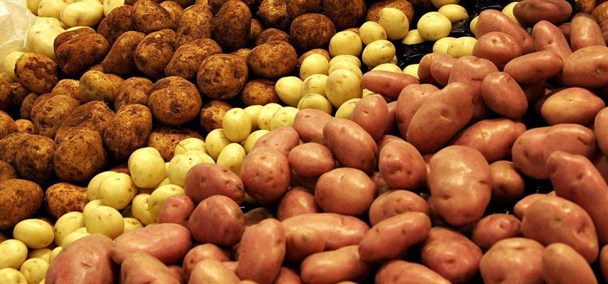 В Барановичском районе у пенсионерки украли 420 кг картофеля