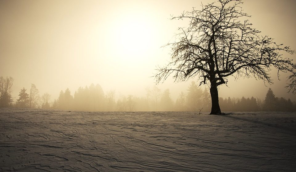 Ученый: Зима близко — Земля входит в 35-летний холодный цикл