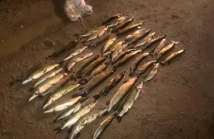 У жителя Солигорского района за 44 щуки конфисковали «Опель»