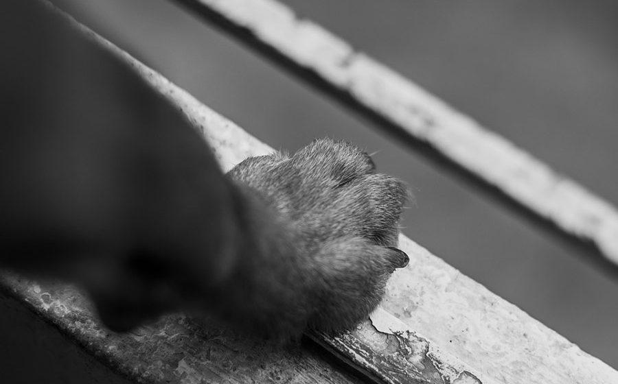 В отношении витебчанки, выбросившей с восьмого этажа собаку, возбуждено уголовное дело