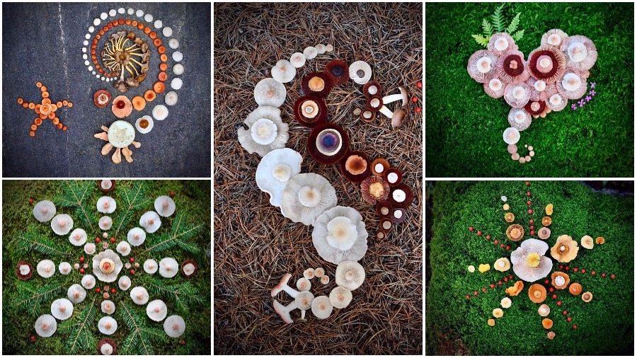 В Финляндии бывший инструктор по дайвингу создает необычные картины из диких грибов