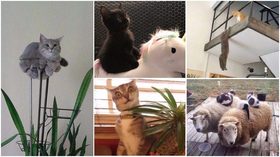 Подборка смешных фотографий кошек из Snapchat, которая гарантированно поднимет вам настроение