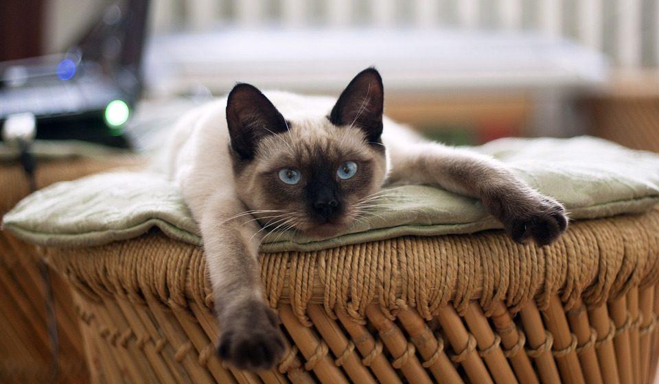 Ученые выяснили, что кошки могут защитить маленьких детей от заболевания астмой