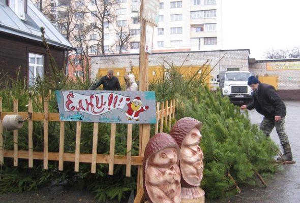 Стало известно, когда в Барановичах откроются елочные базары