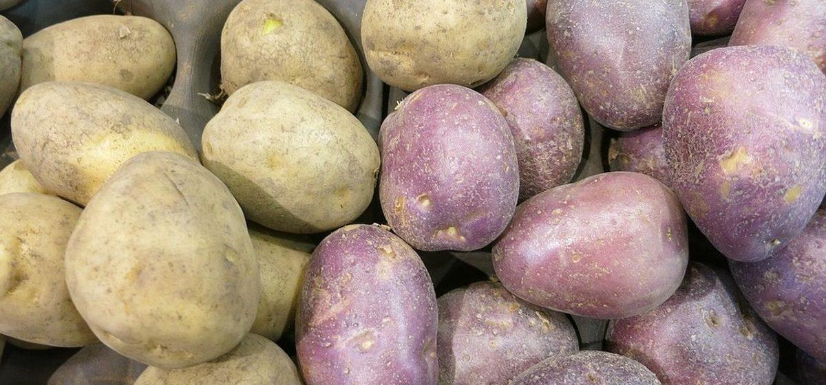 В Беларуси выросла урожайность картофеля