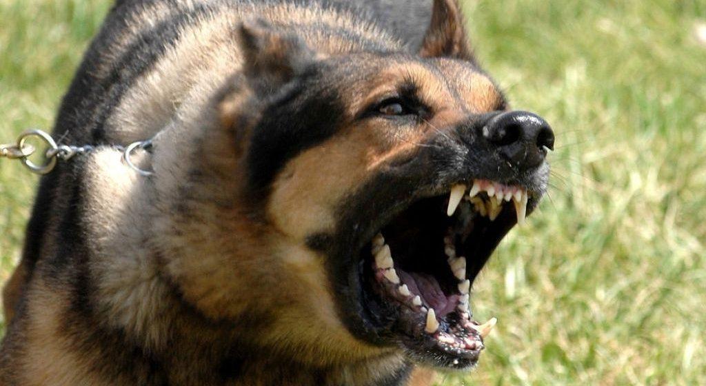 Годовалый ребенок в Полоцком районе дернул собаку за хвост, а та укусила его за голову