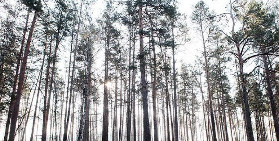 В Мядельском районе мужчина больше месяца скрывался в лесу от милиции