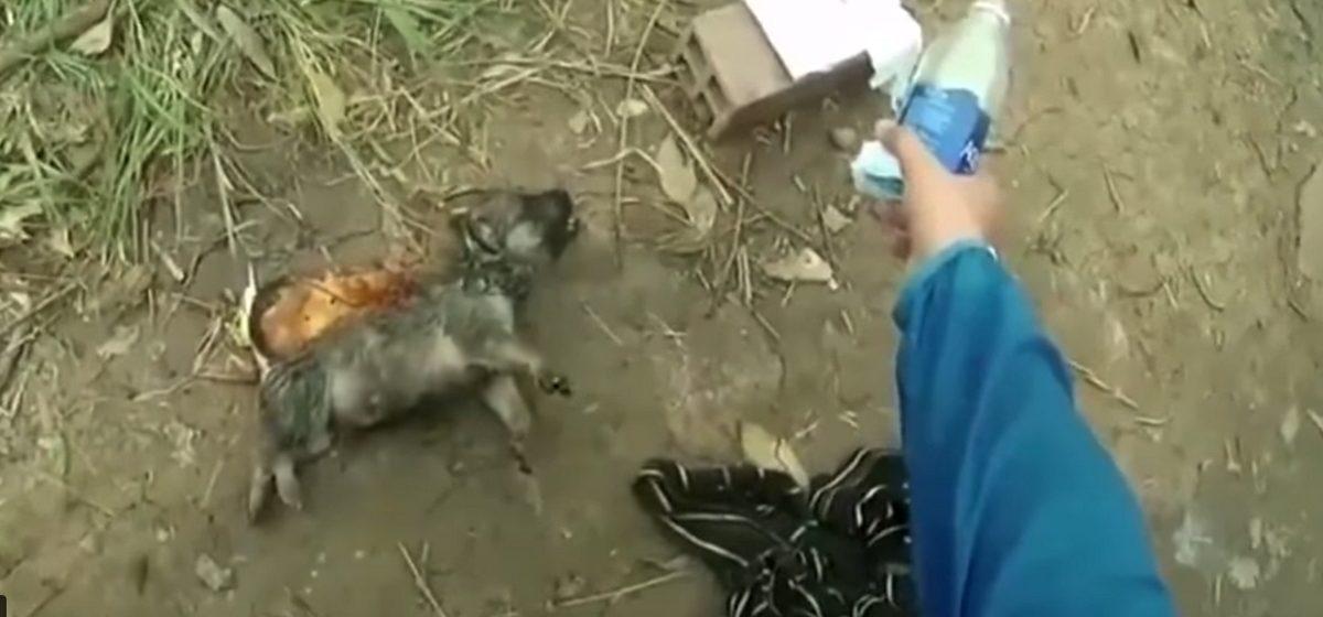 Вьетнамец спас захлебнувшегося щенка, сделав ему бутылкой вентиляцию легких (видео)