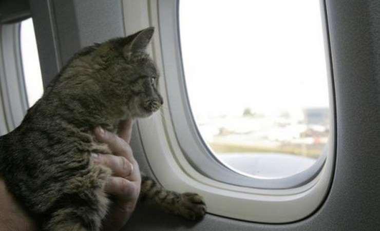 В Киеве самолет два часа не мог взлететь из-за слишком большого количества котов на борту
