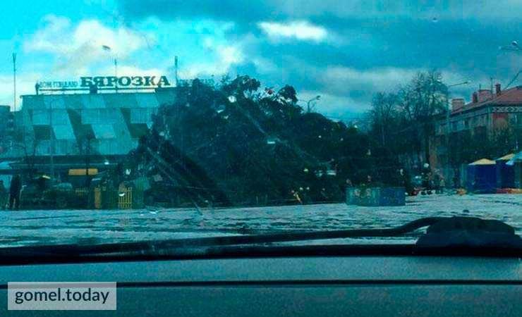 Фотофакт. В Беларуси из-за сильного ветра падают новогодние елки