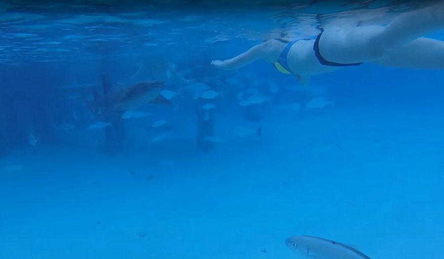 На Багамах мужчина снял на камеру, как на его жену напала акула (видео)