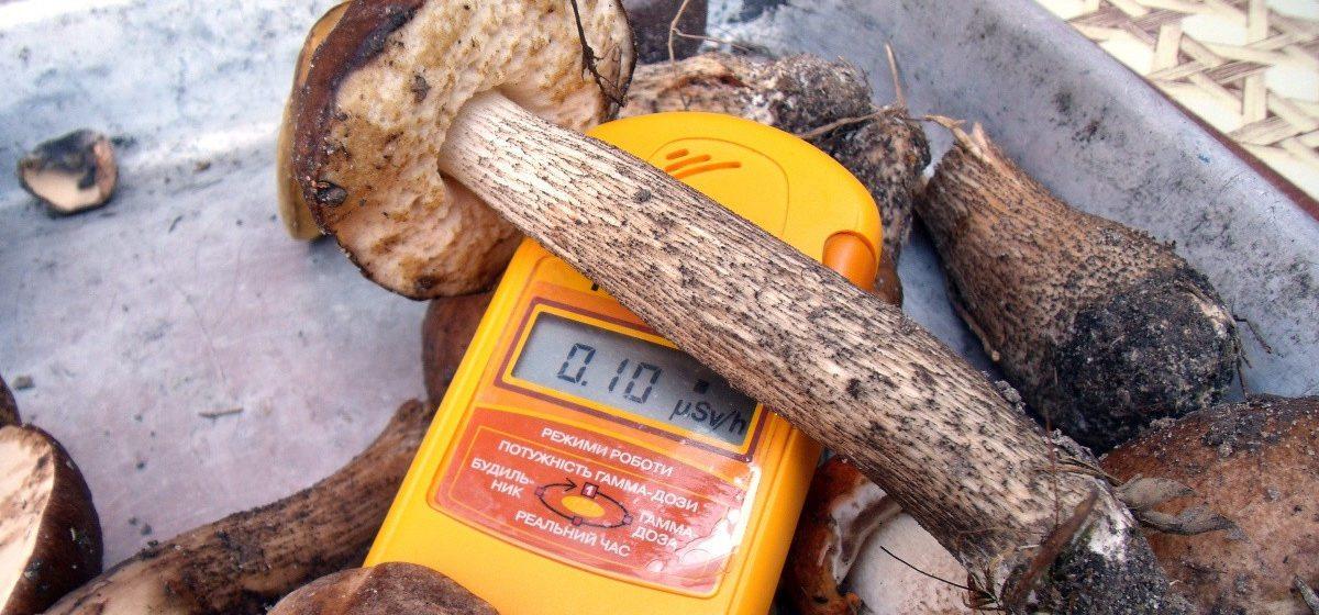 Во Франции обнаружили 3,5 тонны радиоактивных грибов из Беларуси