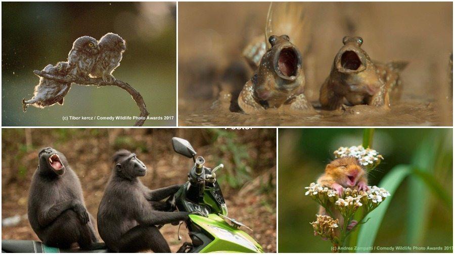 Подборка победителей конкурса смешных фотографий дикой природы: веселая мышь, нелепая сова и реактивная утка