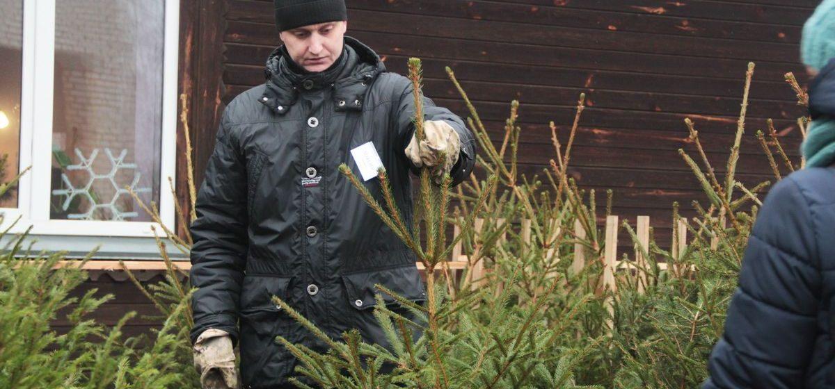 Почем будут продавать елки и сосны в Барановичах и как изменились цены за последние 5 лет