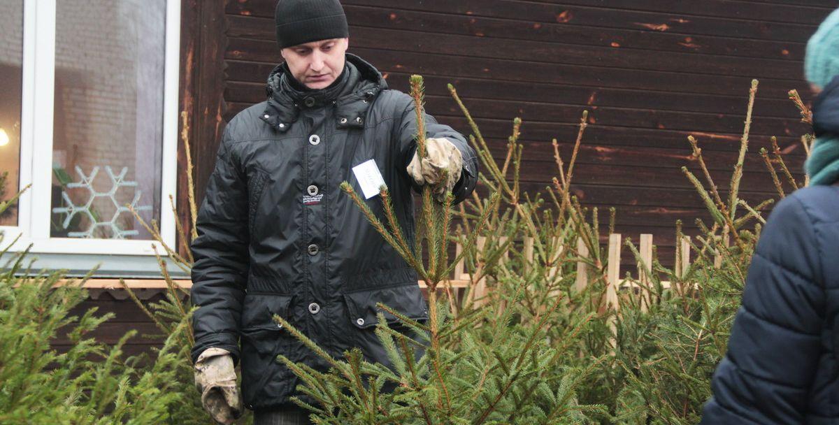 Продажа елок на территории Барановичского лесхоза в 2016 году. Фото: Юрий ПИВОВАРЧИК, Intex-press