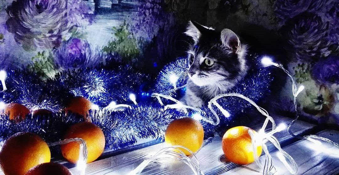 Барановичи в Instagram. Лучшие фото за 9 — 16 декабря