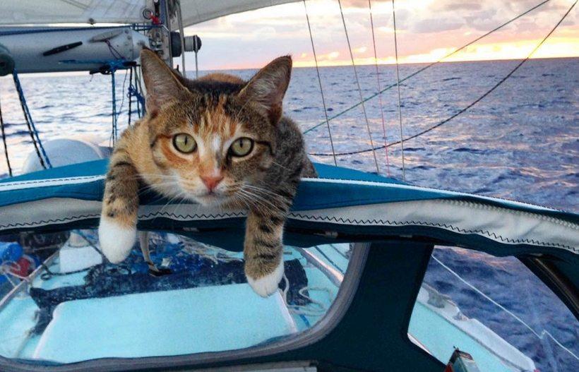 Поляк и кот семь месяцев дрейфовали в океане на сломанной лодке