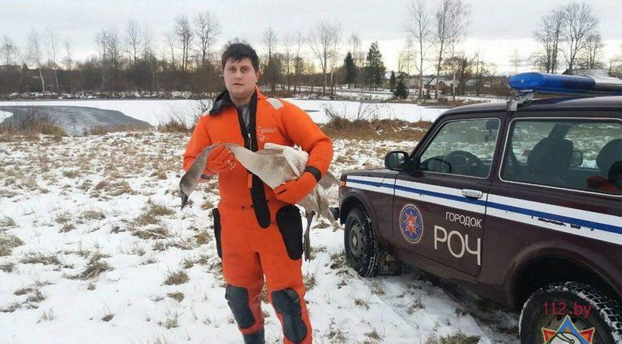 В Городокском районе спасатели освободили лебедя, который вмерз в лед