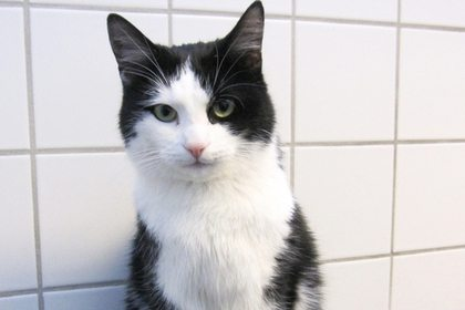 Кот пробыл 40 минут в работающей стиральной машине и выжил