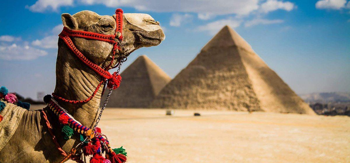 Чем Египет похож на ёлку?*