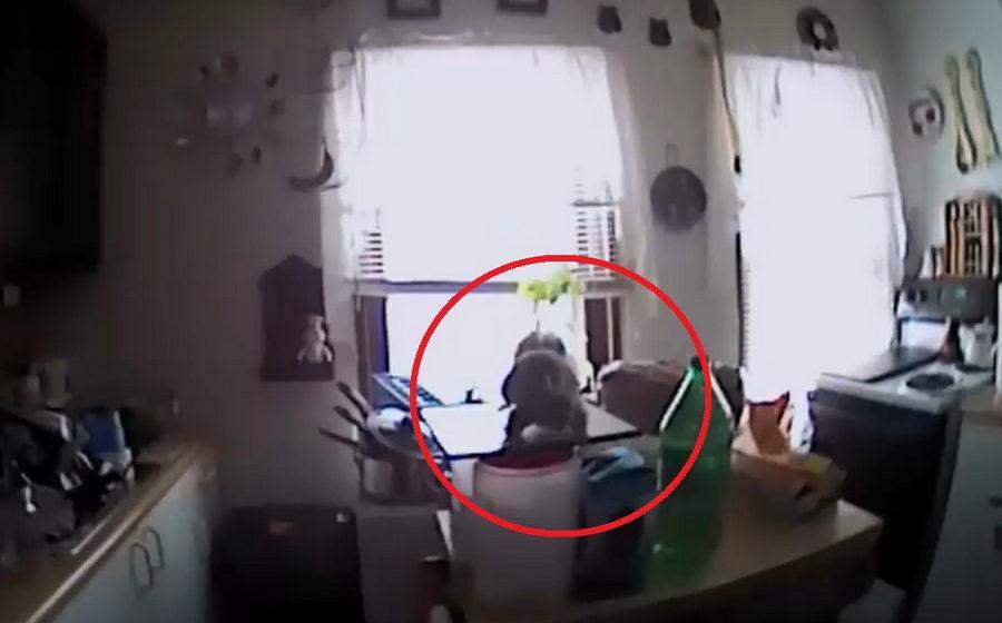 В США агрессивная белка забралась в дом и напала на приехавших на вызов полицейских (видео)