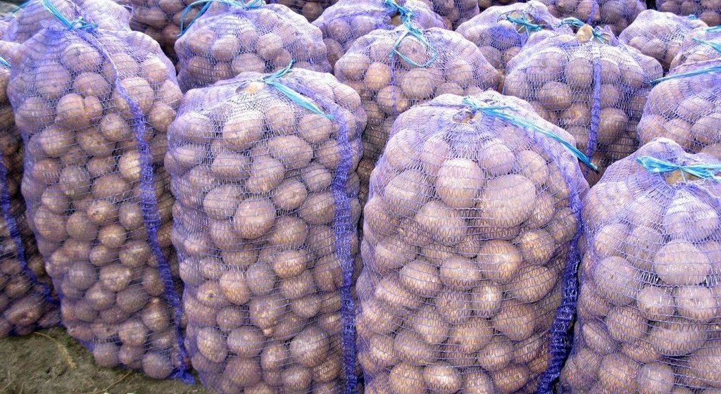 Беларусь стала крупнейшим потребителем украинской картошки