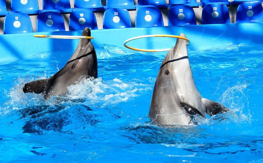 Минприроды предложило запретить передвижные и контактные зоопарки