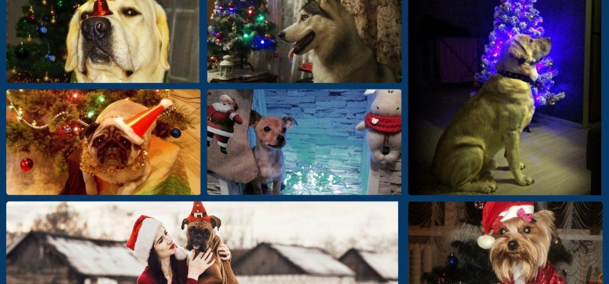 Моя собака и Новый год: определены победители новогоднего фотоконкурса Intex-press