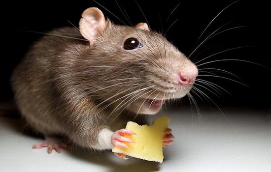 В Казахстане мыши пробрались в банкомат и сгрызли деньги (видео)