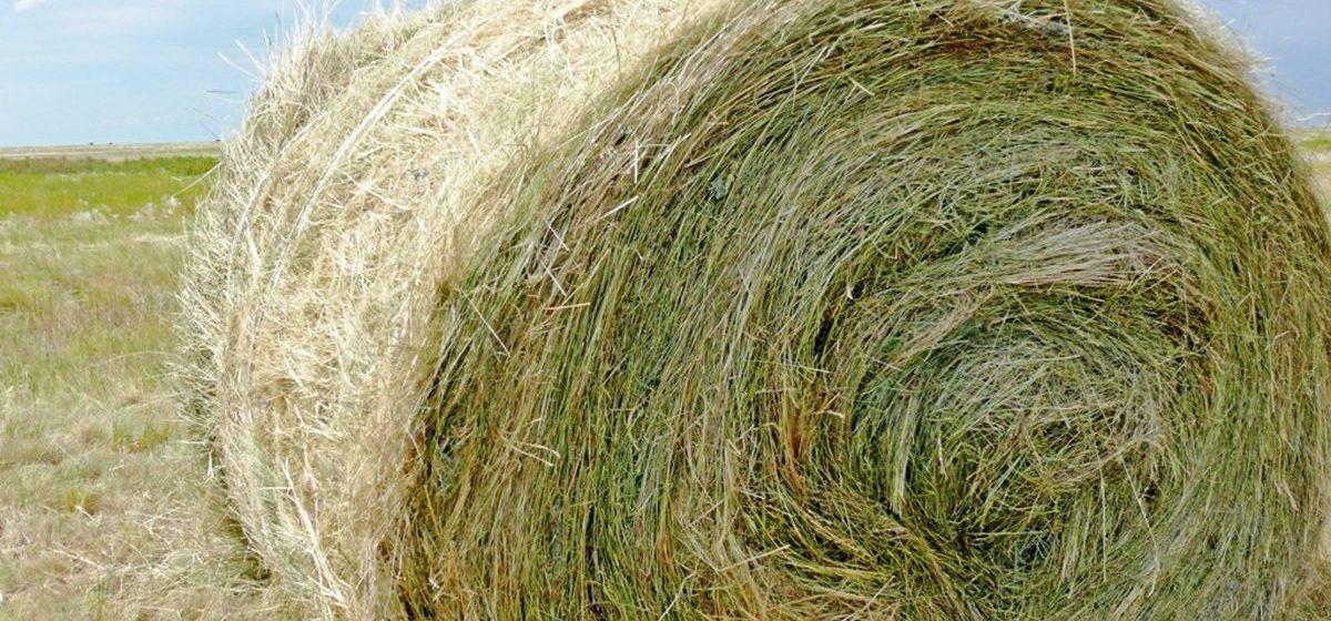 Барановичский бизнесмен украл с поля в Ляховичском районе 14 рулонов сенажа