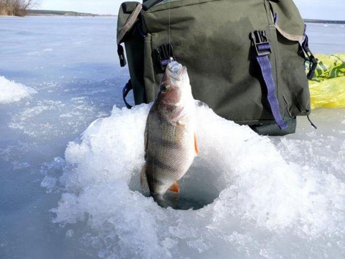 В три раза больше рыбы разрешили ловить на водоеме под Ляховичами