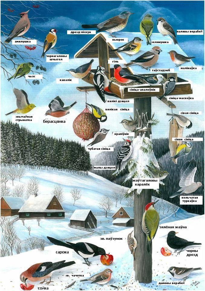 Фото: http://birdwatch.by