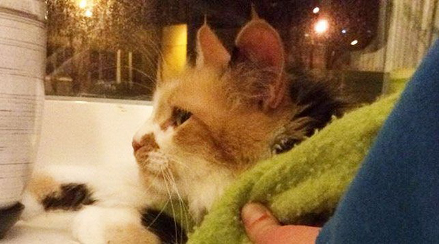 В Минске сотрудники МЧС освободили застрявшего в батарее кота