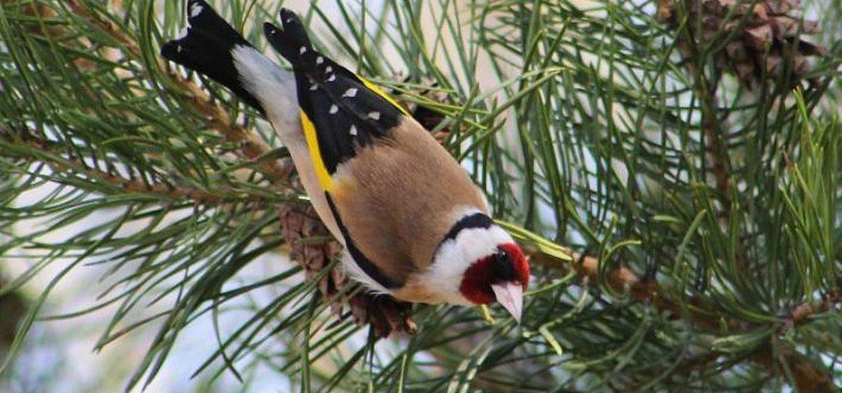 В бесплатной школе наблюдения за птицами, которую откроют в Барановичах, научат различать более 100 видов птиц