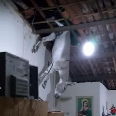 В сети набирает популярность видео, как в Бразилии заблудившийся осел провалился в дом через крышу