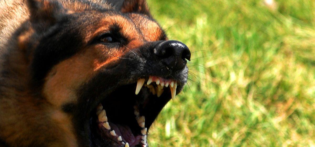 Восемь человек пострадали от бешеных животных в Барановичском районе за полтора месяца 2018 года
