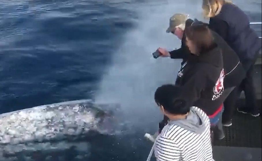Туристы ради селфи с китом рисковали жизнью и свободой (видео)