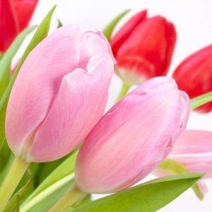 Накануне 8 Марта в Барановичах пройдет цветочная ярмарка