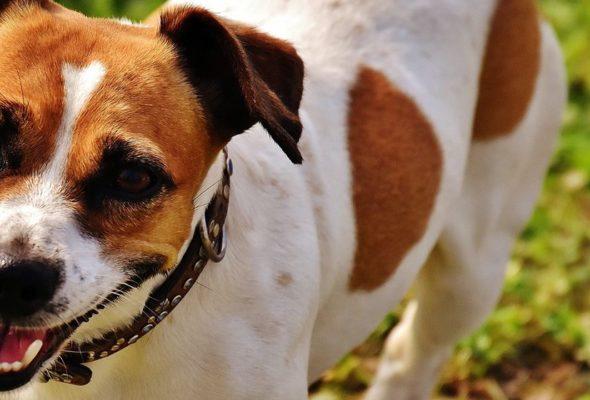 То, что надо знать хозяину собаки