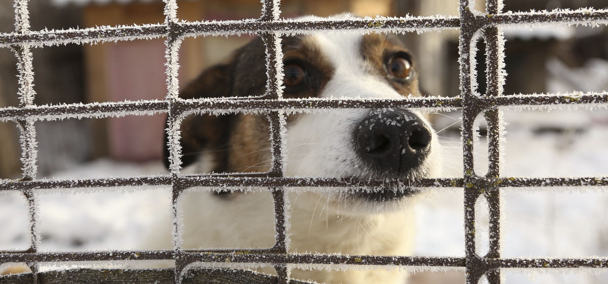 Приют для бездомных животных построят в Барановичах. Подвели итоги общественного обсуждения проекта