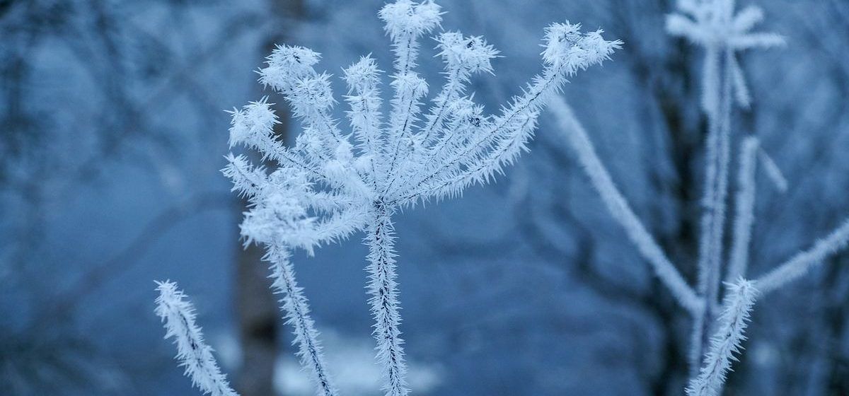 Отпустит ли мороз в воскресенье, 25 февраля?